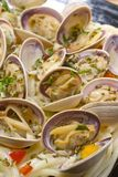 Baby clams Stock Photography