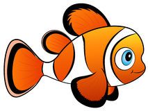 Baby Clown Fish Vector Illustration. Vector Illustration of a cute colorful Baby Clown Fish Royalty Free Stock Image