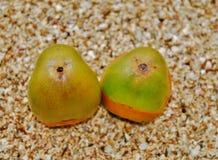 Baby Coconut Royalty Free Stock Photos