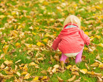 Baby collecting fallen leaves. Rear view Stock Photos