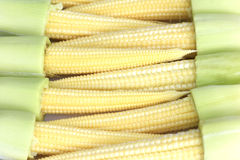 Baby corn. Pods, baby corn on a white background put together a beautiful sort Royalty Free Stock Photos