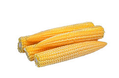 Baby corn Stock Image