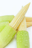 Baby corn. Isolated on white background Royalty Free Stock Images