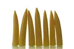 Baby corn Royalty Free Stock Photo