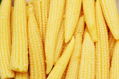 Baby corn arranged. As a background Royalty Free Stock Image