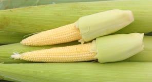 Baby corn on banana leaf. Against white background Royalty Free Stock Photos