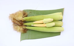 Baby corn on banana leaf. Against white background Stock Images
