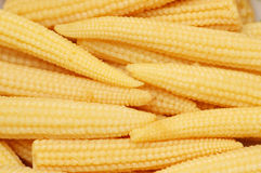 Baby corn cobs. Arranged as a background Stock Image