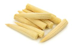 Baby corn cobs. Isolated on white background Royalty Free Stock Photos