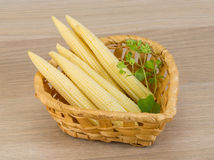 Baby corn Stock Photo