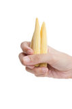 Baby Corn in Hand. Royalty Free Stock Photo