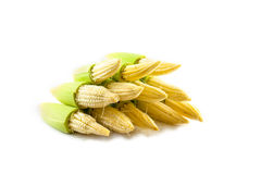 Baby corn. On isolated background Stock Images