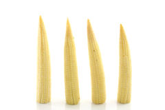 Baby corn isolated in white background.  Royalty Free Stock Photography