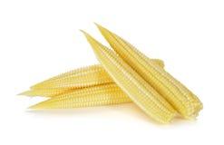 Baby corn isolated on white. Background Royalty Free Stock Image