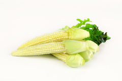 Baby corn prepare for cooking. Baby corn with dew drop prepare for cooking Royalty Free Stock Photo