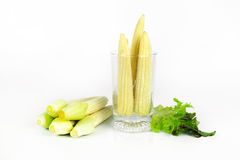 Baby corn prepare for cooking. Baby corn with dew drop prepare for cooking Stock Image