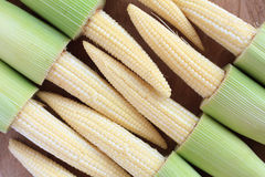 Baby corn. On wood background Stock Images