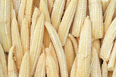 Baby corn. Baby corn, Young small corn stock image