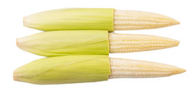 Baby Corns III Stock Photography