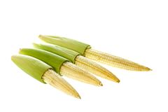 Baby Corns Isolated. Isolated image of fresh baby corns Royalty Free Stock Images