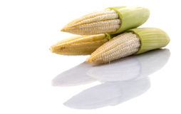 Baby Corns IX Royalty Free Stock Image