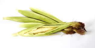 Baby corns Stock Images