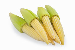Baby corns Stock Image
