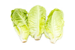 Baby Cos Lettuce. Stockfotografie