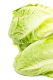 Baby Cos Lettuce. Stockbild