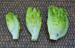 Baby Cos lettuce Royalty Free Stock Photos