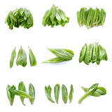 9 in 1 Baby Cos lettuce Royalty Free Stock Photography