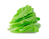 Baby Cos lettuce. Royalty Free Stock Images