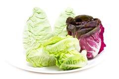 Baby Cos, Radicchio and White Cabbage. Stock Image