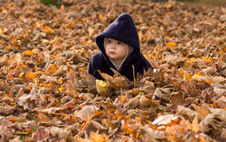 Baby covered by autumn leaves stock photo