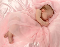 Baby Covered in Pink. Baby girl covered with pink sheer fabric royalty free stock photos
