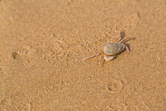 Baby crab on the sea shore Royalty Free Stock Photography