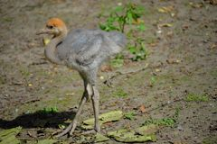 Baby animal. Animal baby in the zoo royalty free stock image