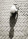 Baby Crawling on Brown Bricks during Daytime Stock Images
