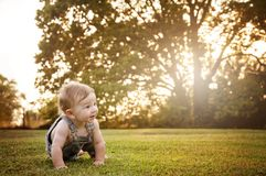Baby crawling country sunlight Stock Photos