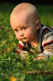 Baby crawling on grass. Little baby with brown eyes lying on green grass and crawling ahead Royalty Free Stock Images