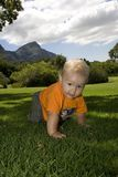 Baby crawling on grass outdoors. Baby crawling towards me with orange shirt on grass Royalty Free Stock Images