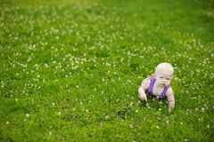 Baby crawling on a green grass Royalty Free Stock Photos