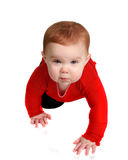 Baby crawling on white background Royalty Free Stock Photos