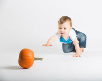 Baby Crawls Toward Pumkin with Arm Out. A cute 1 year old sits in a white studio setting with a pumpkin. The boy reaches out his arm towards a pumpkin in the Royalty Free Stock Photo