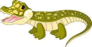 Baby  crocodile. Illustration of very cute baby  crocodile Royalty Free Stock Image