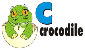 Baby crocodile and word crocodile and letter c. Smiling little crocodile sit on egg with black word crocodile and blue letter c vector illustration