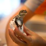 Baby crocodiles Stock Photos
