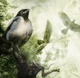 Baby crow on a branch. Dreams of flying. Parents soar in the sun rays. Illustration. Made from several files stock image
