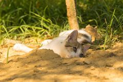 Baby cute cat playing and posing Stock Images