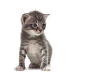 Baby Cute Kitten on a White Background Stock Images